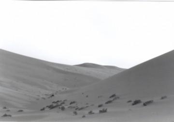 medium_Dunes.jpg